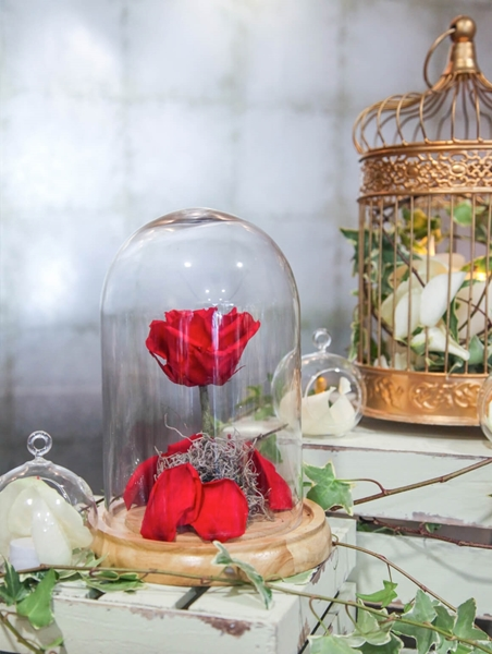 Picture of Beauty and the Beast Rose