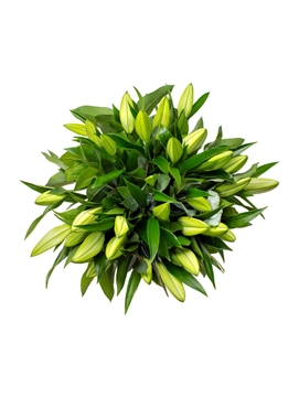Picture of Simply Lilies