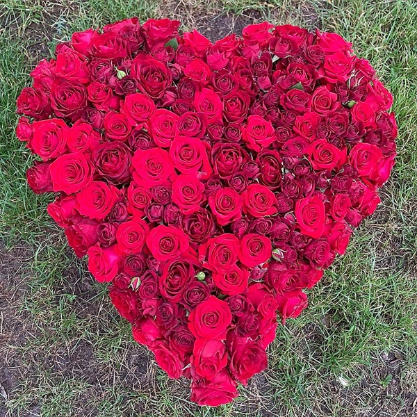 Picture of Pure Red Roses  Heart