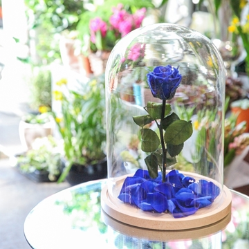 Picture of Blue Beauty & The Beast Rose