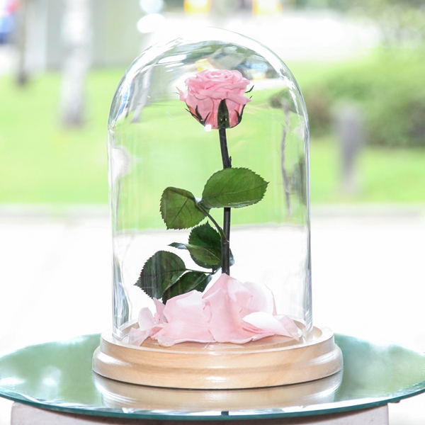 Picture of Pink Beauty & The Beast Rose
