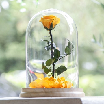 Picture of Yellow Beauty & The Beast Rose
