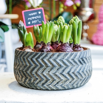 Picture of Hyacinth Planter