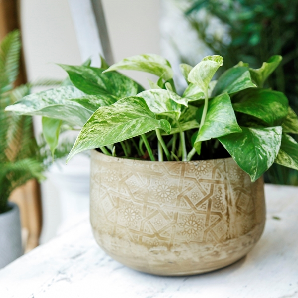 Picture of Green Planter