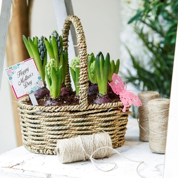Picture of Hyacinth basket