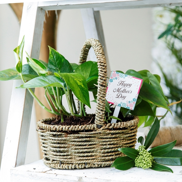 Picture of Green Basket