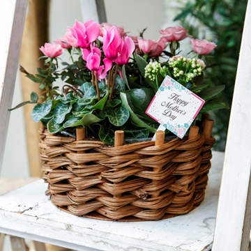 Picture of Summer Planter