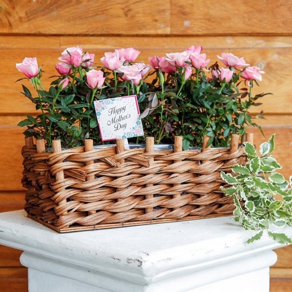 Picture of Pink Rose Planter