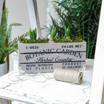 Picture of Vintage Box With Hyacinths