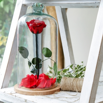 Picture of Beauty and The Beast, Red Rose