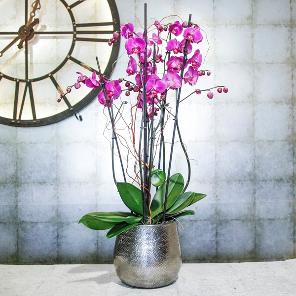 Picture of Fresh Cerise Pink Orchids