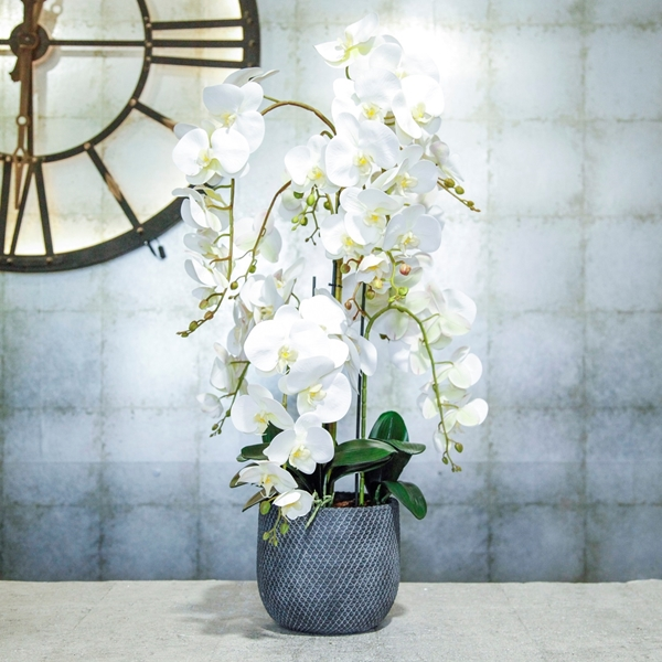 Picture of Cascading Silk Orchids