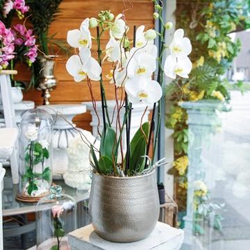 Picture of Fresh Orchid Arrangement